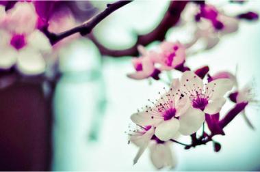 En Domothérapie, le printemps est votre allié.